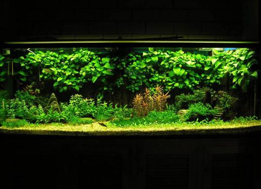 昆明迷你雨林缸設計制作,雨林缸