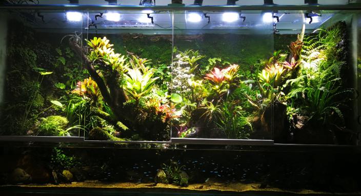 昆明生態雨林缸供應商,雨林缸