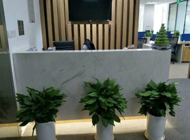 黄浦区花卉租赁公司,租赁
