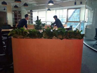 浦东办公室绿植租赁价格,租赁