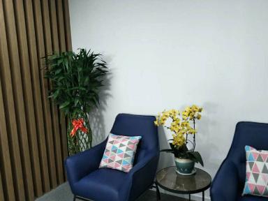 黄浦酒店绿植租赁优惠价格,租赁