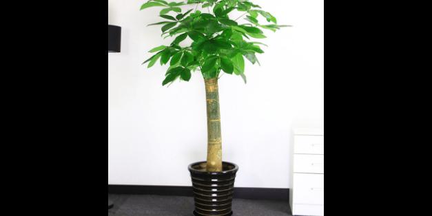 錫山區植物租賃價格 誠信經營「上海囫佳實業供應」