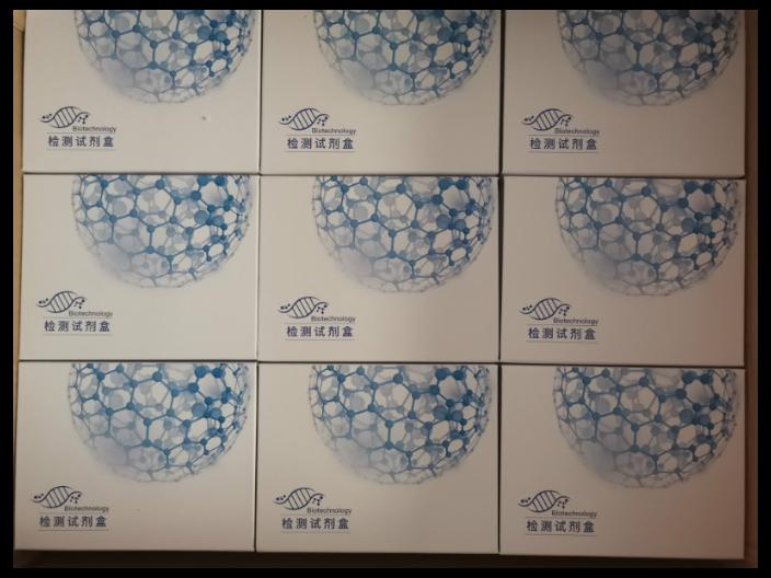 小鼠突触极蛋白2(SYNPO2) ELISA 试剂盒