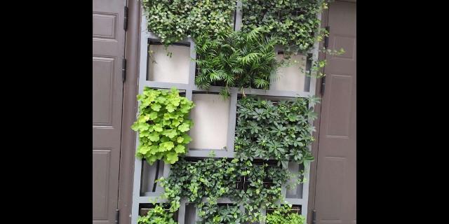 山东活植物墙品种 来电咨询「杭州云乘园艺科技供应」