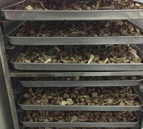 綿陽香菇烘干機價格 真誠推薦「綿陽市靖華節能環保科技供應」