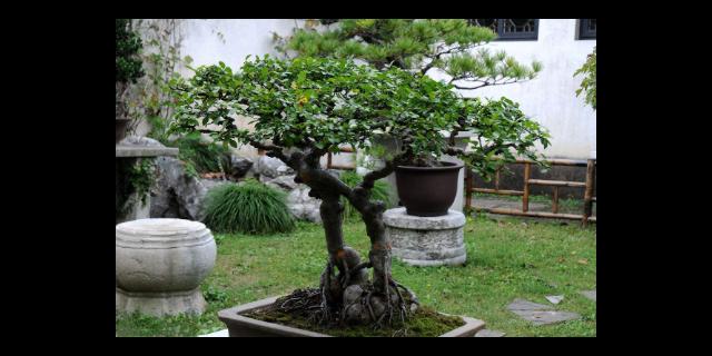 四川口碑好的苗木盆景包括哪些