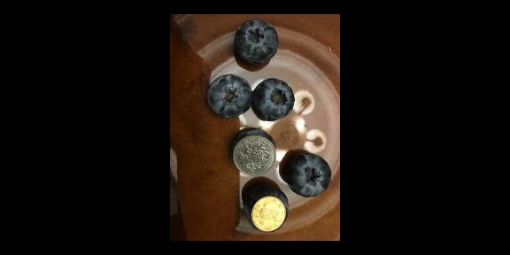 烟台优瑞卡蓝莓苗种植基地「台州市君临蓝莓供应」