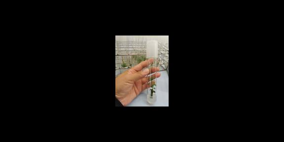 滨州蓝莓种植蓝莓苗批发