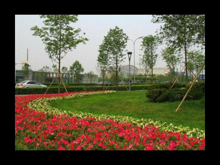 黄浦区推广绿化工程欢迎咨询