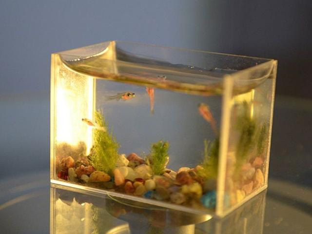 建德鱼缸供应商