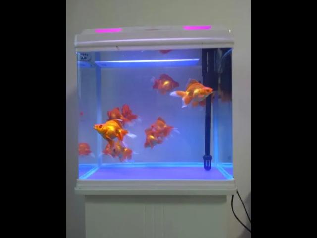 昆山魚缸制作企業 尚美供