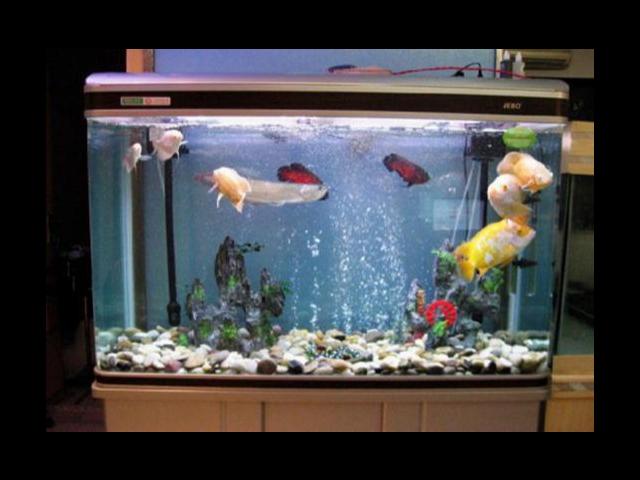 江阴鱼缸哪里有卖