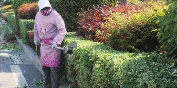 鼓樓區花卉修剪價錢 推薦咨詢「南京康之蕊園藝供應」