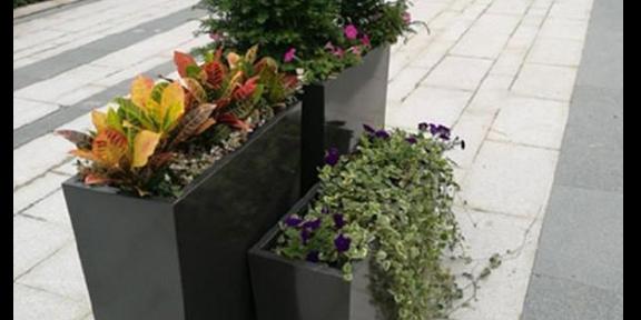 溧水區綠植花卉修剪公司靠譜嗎 歡迎咨詢 南京康之蕊園藝供應