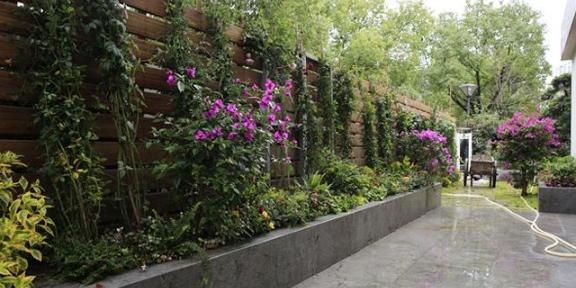 鼓楼区专业花卉种植怎么收费