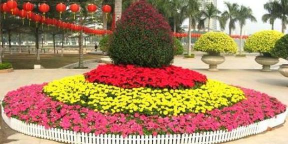 玄武區室內綠植花卉種植價位 貼心服務「南京康之蕊園藝供應」