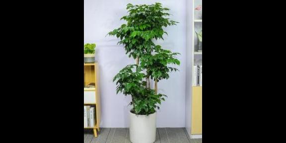 室内花卉养护好不好