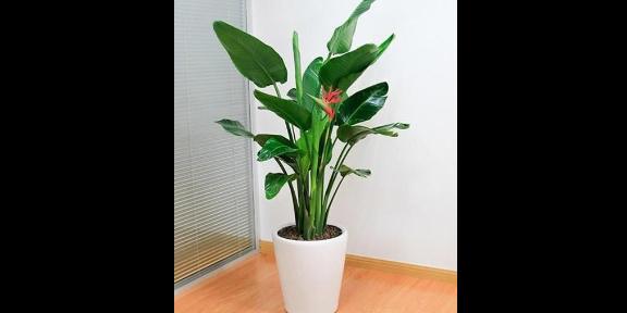 專業花卉養護公司哪里好 歡迎來電 南京康之蕊園藝供應