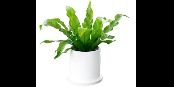 高淳區專業綠植花卉養護一般多少錢 貼心服務「南京康之蕊園藝供應」