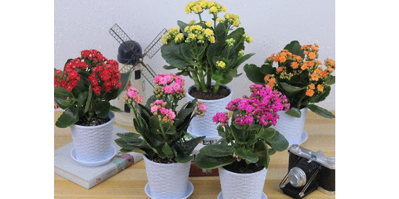 室内花卉批发销售价格