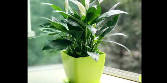 商場花卉批發企業 有口皆碑 南京康之蕊園藝供應
