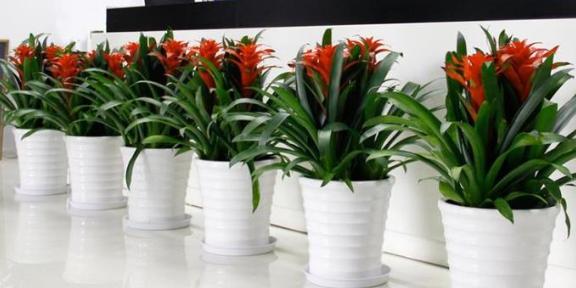 鼓楼区办公室花卉租赁价格