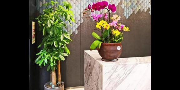 江宁区办公室绿植花卉租摆哪家便宜