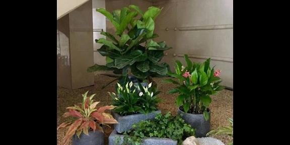 六合區花卉綠植租賃公司 服務為先 南京康之蕊園藝供應