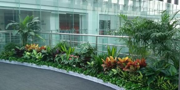 玄武區專業花卉綠植租擺公司 貼心服務「南京康之蕊園藝供應」