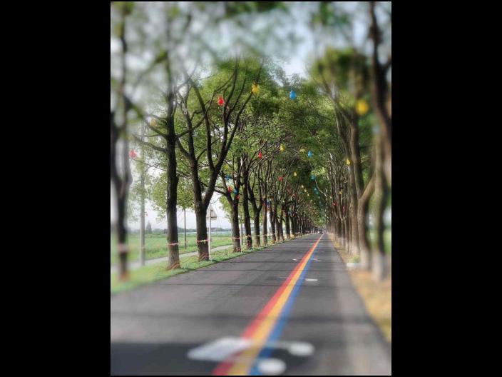 广东本地音乐彩虹路面创新服务 欢迎来电 江苏龙池山金生态文化旅游供应