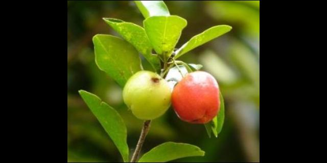 成都市果樹價格 誠信服務 聊城桃花源園藝科技供應
