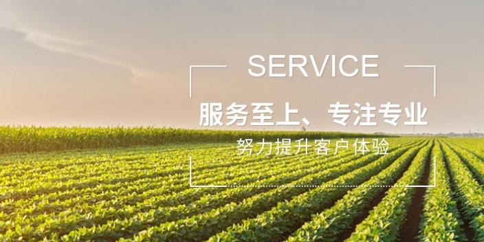 虹口区网络技术服务值得推荐