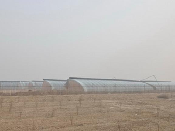 山西连栋薄膜温室大棚 服务至上「天津市联合农业设施科技供应」