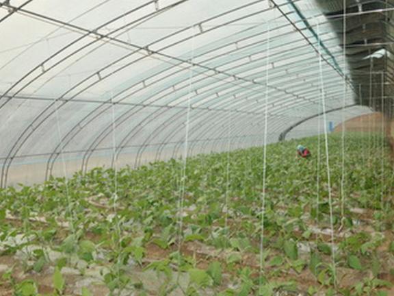 阳光板板连栋温室配件厂家 欢迎来电「天津市联合农业设施科技供应」