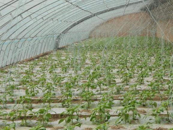 上海阳光板温室多少钱