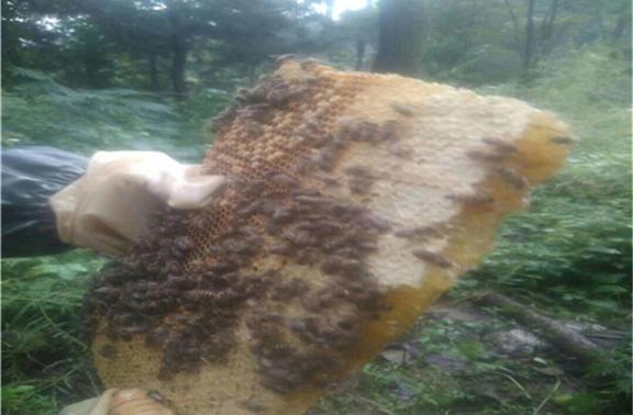 原生態蜂巢蜜批發價格 貼心服務 青聽驛站供應