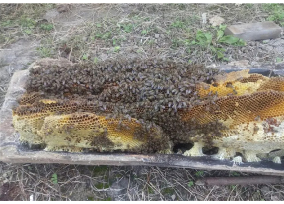 森林蜂巢蜜廠家直銷,蜂巢蜜