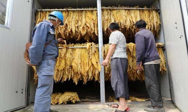 云南新型烟叶烘烤设备厂 欢迎来电 云南米数电气供应