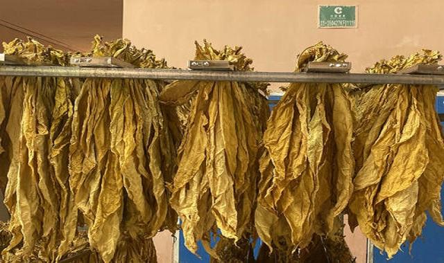 昆明梳式烤烟烟夹多少钱 服务至上 云南米数电气供应