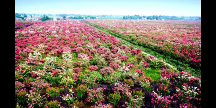 静海区认识花卉种植推荐咨询