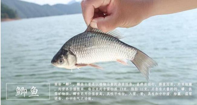 提供南阳市有机鱼排名南阳市南都湖农业开发供应