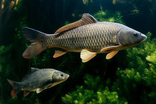 提供南阳市南阳清水鱼直销南阳市南都湖农业开发供应