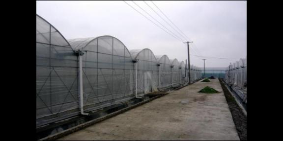 徐州智能連棟溫室,溫室