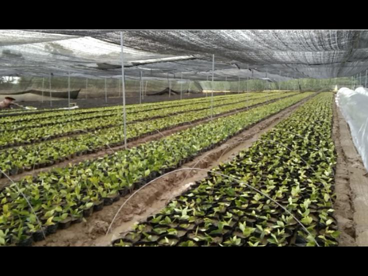 绍兴绿化苗木哪种好 诚信互利「金华市宇帆苗木供应」
