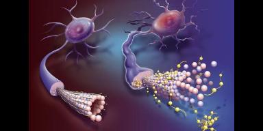南京檢測細胞增殖染色「上海儒安生物科技供應」