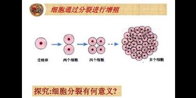 西安cck-8细胞增殖因子