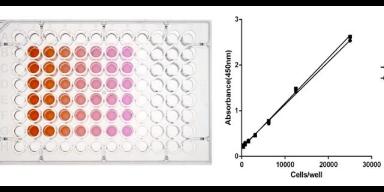 天津mts检测细胞增殖毒性测定试剂盒,细胞增殖