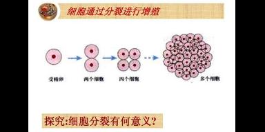 武汉成纤维细胞增殖试剂盒