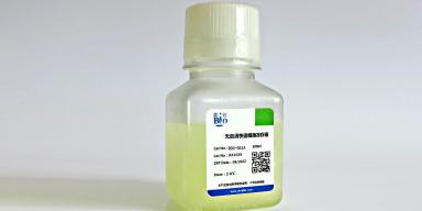 天津精原细胞增殖率