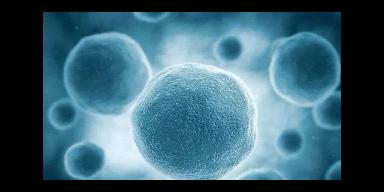 天津mts检测细胞增殖毒性测定试剂盒